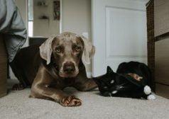 כלב וחתול שוכבים בפתח דלת הבית